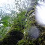 Im Reich von Mononoke Hime – Ein Tag und eine Nacht auf Yakushima