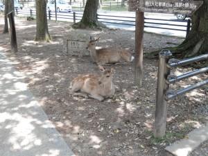 Rehe in Nara